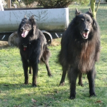 Arielle und Gimba 0212a