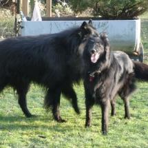 Arielle und Gimba 0212b