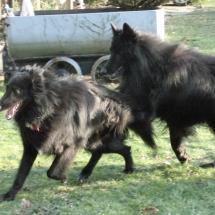 Arielle und Gimba 0212f
