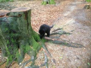 Aura_Kess im Wald2305